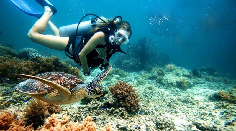 Tắm biến và lặn ngắm san hô là các hoạt động bạn không thể bỏ qua khi đi du lịch Cù Lao Chàm