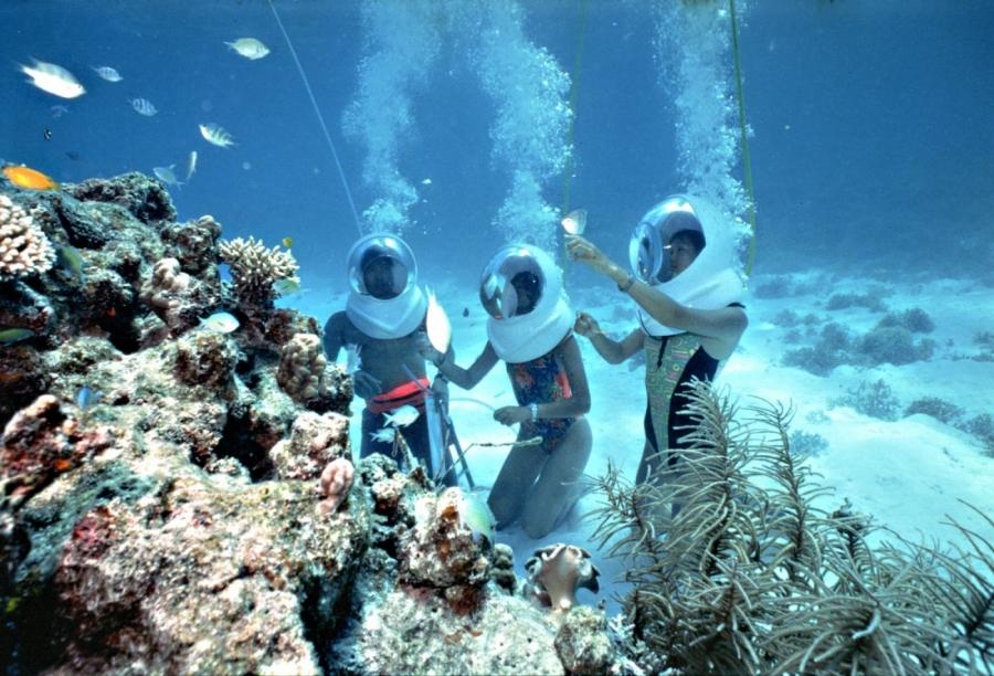 Khám phá vẻ đẹp của các rạn san hô, đa dạng sinh vật biển cùng hoạt động đi bộ dưới biển tại Cù Lao Chàm