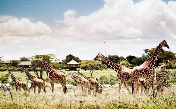 Vinpearl Safari Phú Quốc với hệ thống động vật quý hiếm phong phú và đa dạng