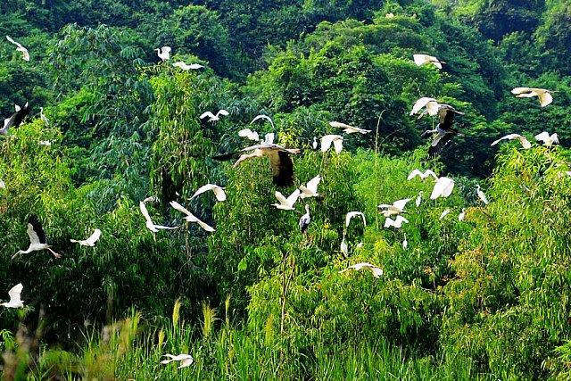 Khu vườn chim Thung Nham là nơi cư trú của hàng nghìn loài chim