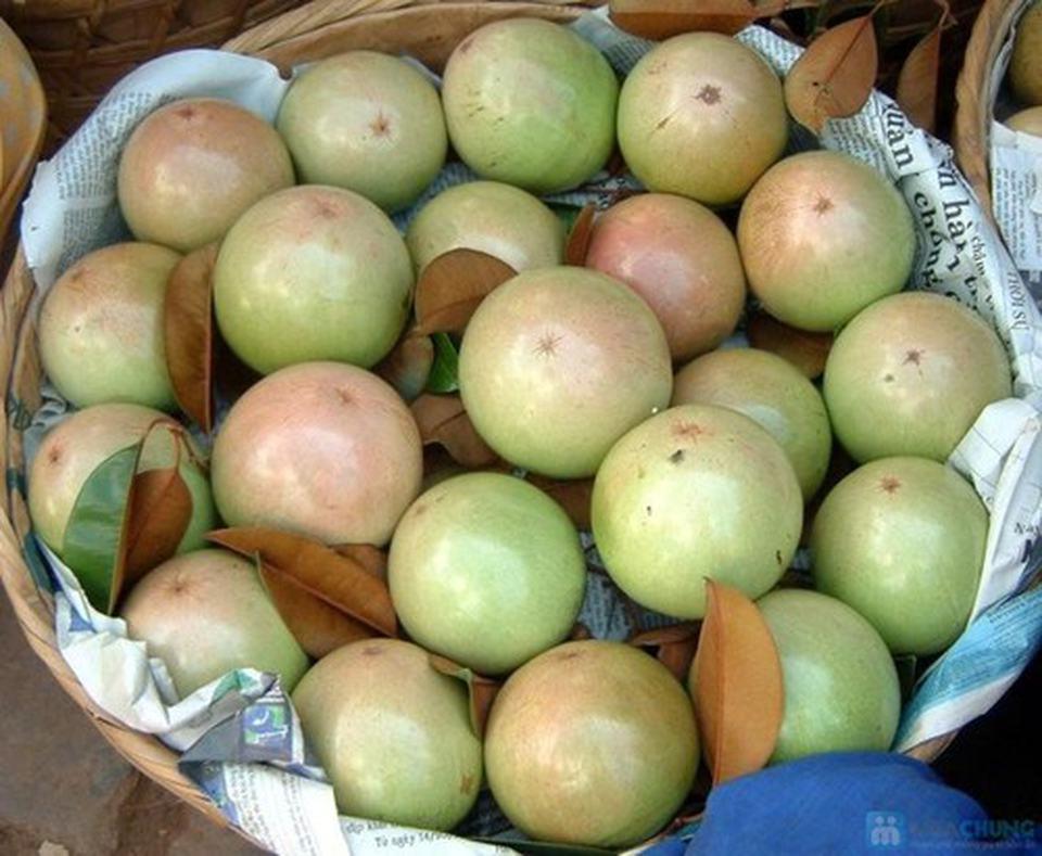 Du lịch Tiền Giang cho gia đình thì đến thăm các vườn trái cây là điều không thể bỏ qua
