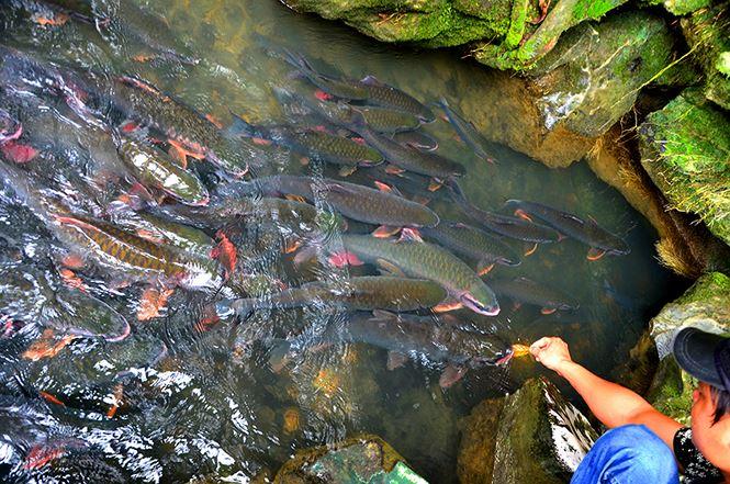 Kinh nghiệm du lịch Suối Cá Thần Cẩm Lương (Thanh Hóa) cho cặp đôi