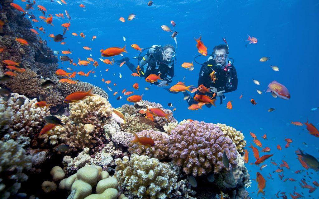 Đến Hòn Thơm lặn ngắm san hô