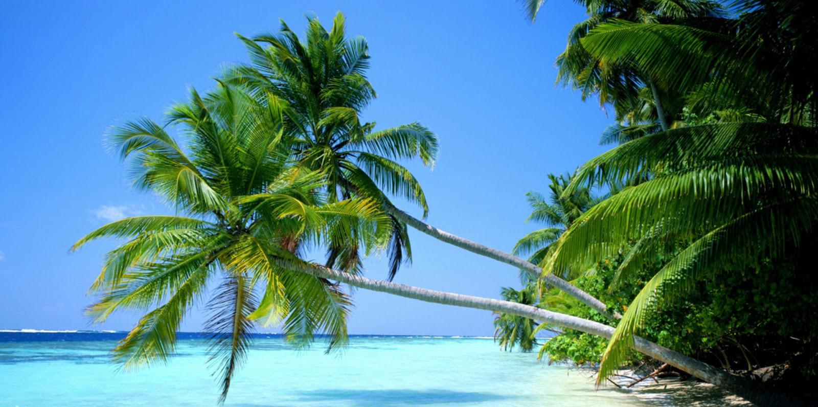 Tắm biển thỏa thích tại bãi Dài