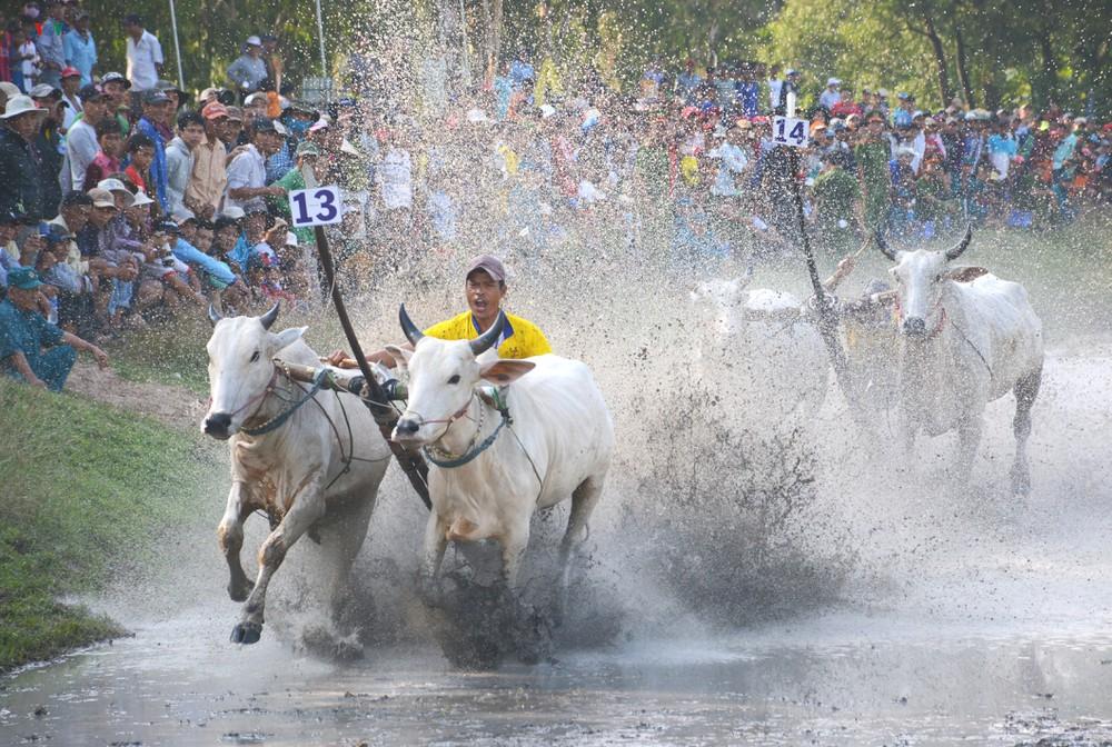 Tết Đolta và hội đua bò Bảy núi