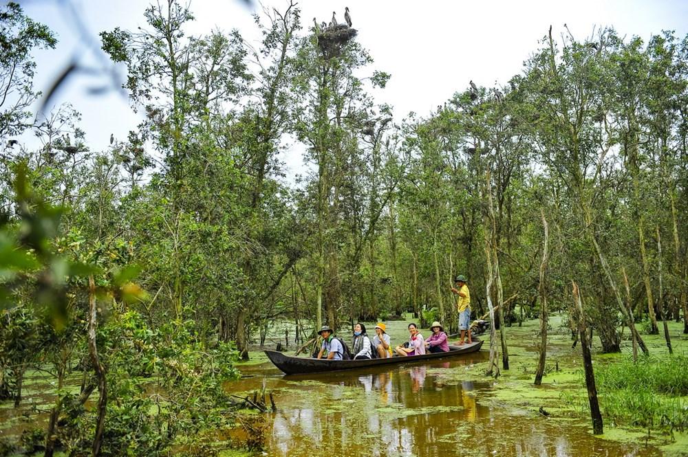 Vườn quốc gia Tràm chim: Địa điểm du lịch Đồng Tháp không thể bỏ qua