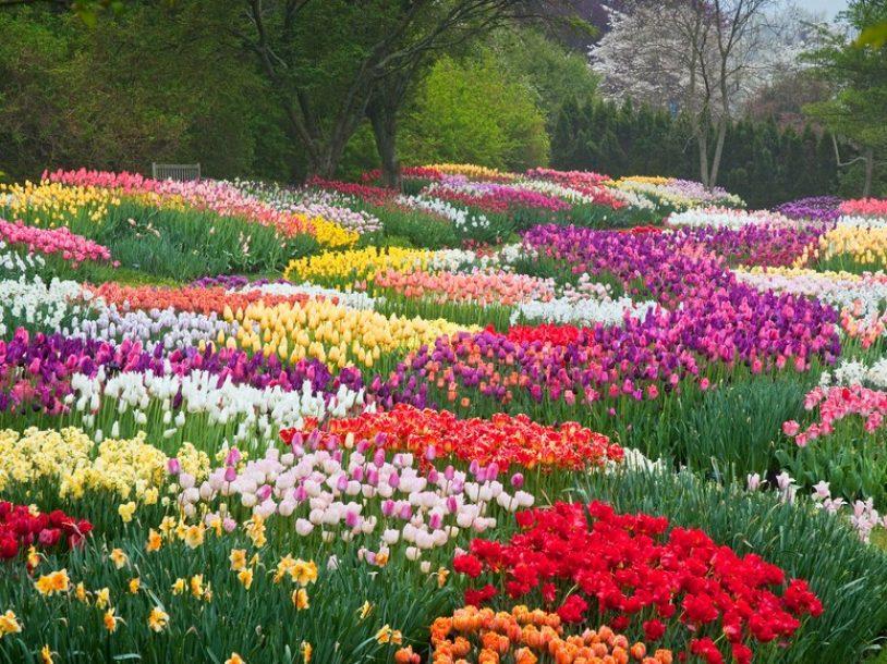 Vườn hoa Đà Lạt - Thiên đường cho chuyến du lịch Lâm Đồng
